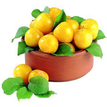 Susine gialle italia